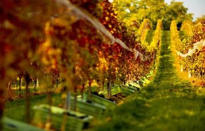 Vínna degustácia - párovanie chutí jedál a vín na letnej terase rotundy